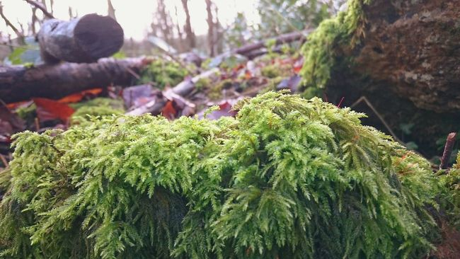 Naturephotography Beautiful Nature EyeEm Nature Lover A Walk In The Woods WoodLand Taking Photos Beauty In Nature Winter Woodland Green Moss MossyRocks Moss-covered Sunlight And Shadow Tree Branches Dead Branches Autumn Colors Autumnleaves