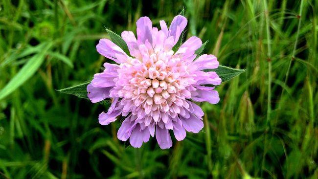 Einfach schön Flowers Nature Naturelovers Macro_collection