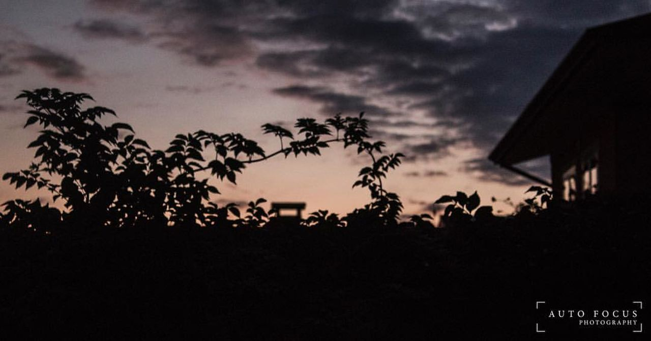silhouette, sky, sunset, tree, cloud - sky, nature, night, scenics, no people, outdoors, beauty in nature, close-up, astronomy, film industry
