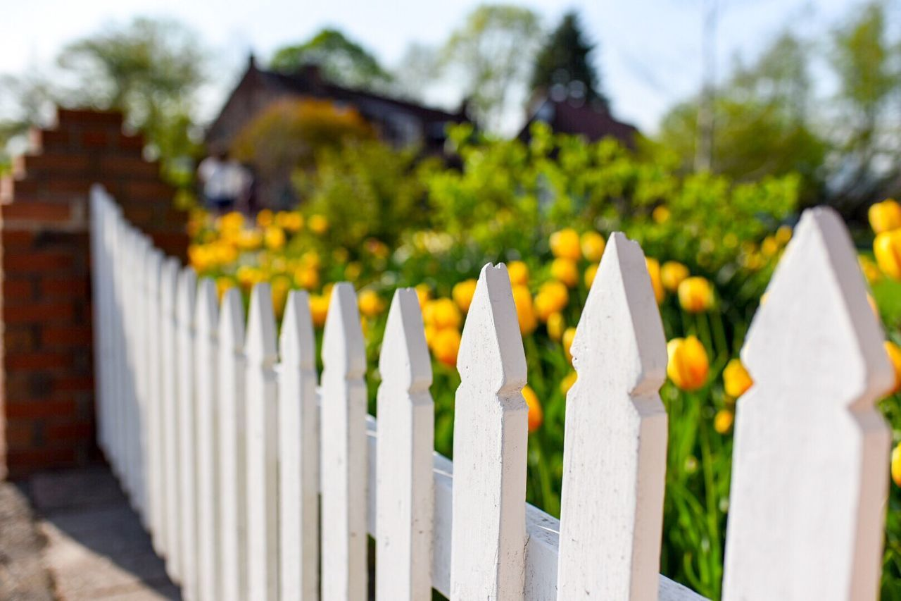 Beautiful stock photos of frühling, Close-Up, Cultivated, Day, Fence