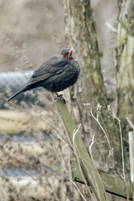 Taking Photos Animal Photography Nature On Your Doorstep Birds Vögelchen Itsgettingcold