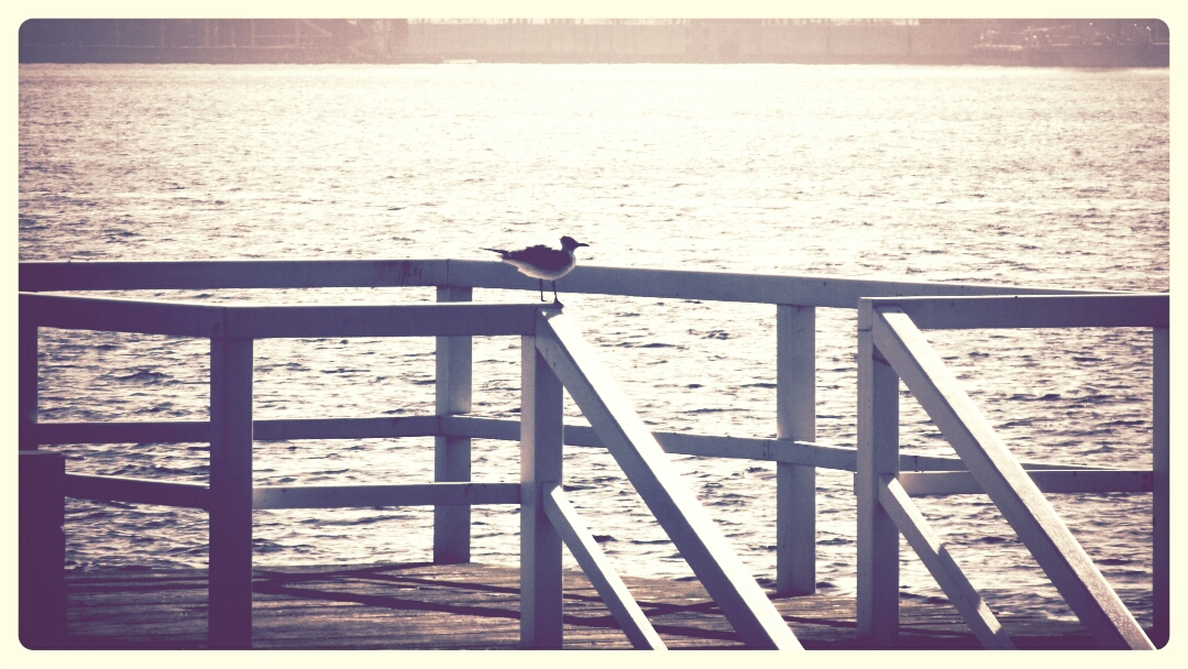 transfer print, water, auto post production filter, sea, railing, pier, built structure, river, rippled, nature, architecture, tranquility, bridge - man made structure, wood - material, tranquil scene, outdoors, sky, bird, connection, scenics