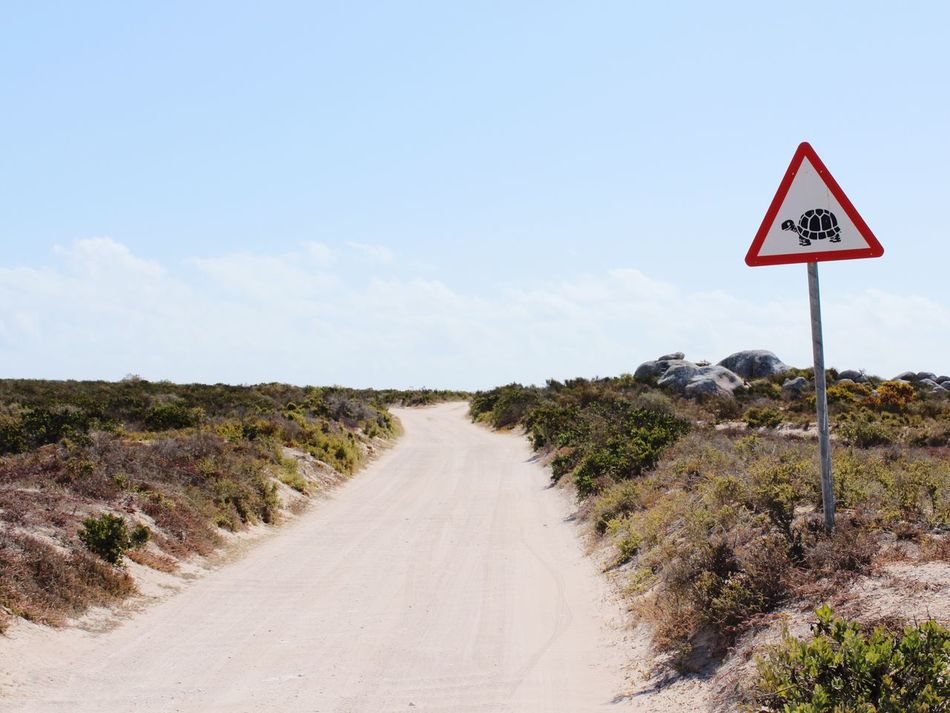 Watch out for tortoises! 🐢 Schildkröte Tortoise South Africa Road Sign Landscape Landscapes African Landscape Safari Animals Safari Africa Beauty In Nature Sand Outdoors Tranquility Sign Traffic Sign No People