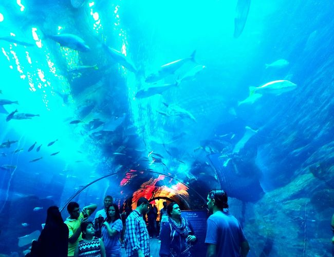 The big aquarium EyeEm Team EyeEm Gallery EyeEm Masterclass The Purist (no Edit, No Filter) The Explorer - 2014 EyeEm Awards EyeEm Best Shots EyeEmBestPics India Canon Calcutta
