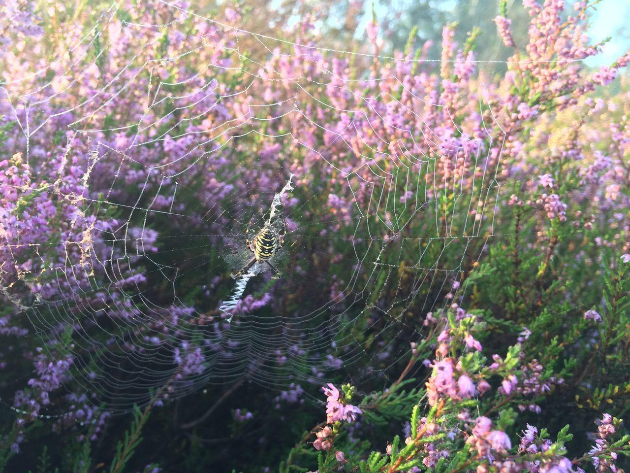 Beautiful stock photos of spinnen, flower, growth, fragility, freshness