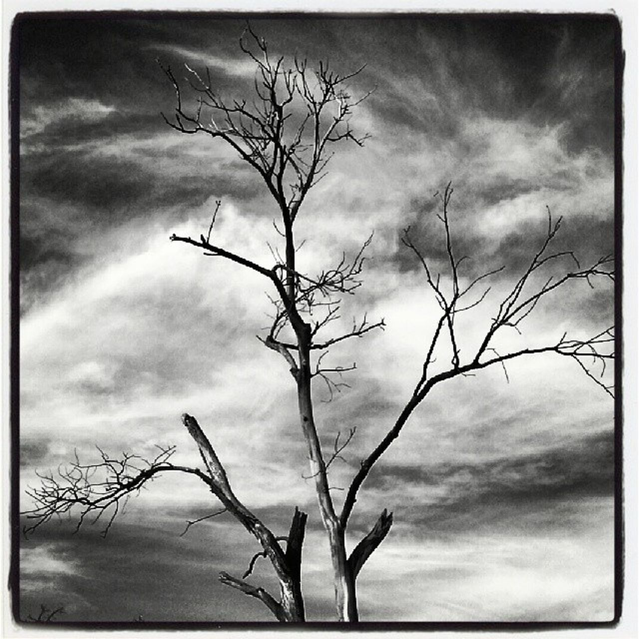 bare tree, branch, sky, tree, nature, outdoors, lone, tranquility, day, no people, silhouette, low angle view, beauty in nature, scenics, dead tree