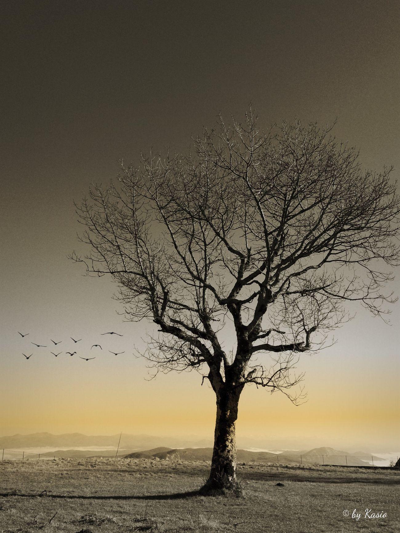 Mi mente libera intranquila, mi pensamiento en un canto, mi cuerpo quisiera estrecharlo contra el tuyo y romper en abrazo. Luis Lorite. Taking Photos Relaxing EyeEm Best Shots EyeEm Best Edits Eye4photography  Landscape_Collection Sky Collection TreePorn Monochrome