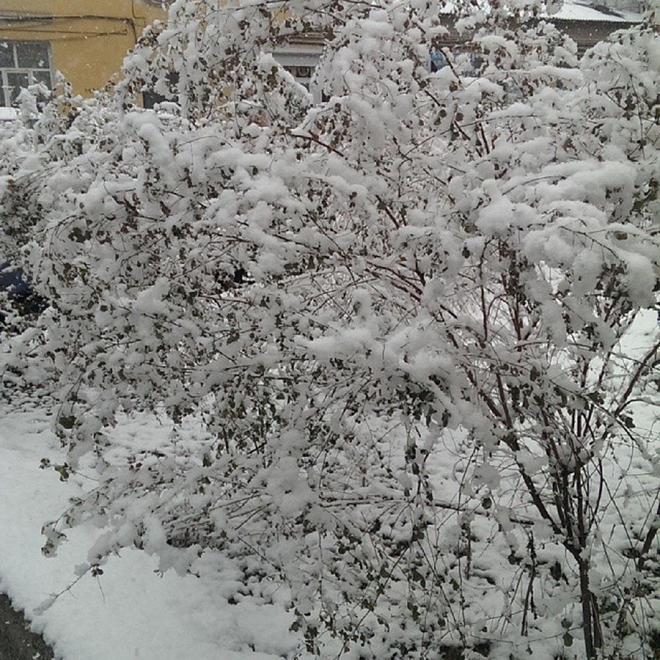 Всем снега!  снег Snow