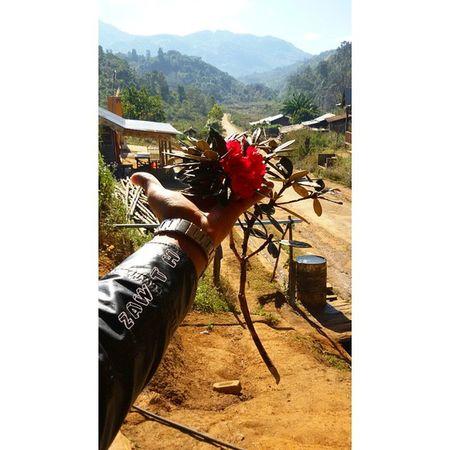 Laligurans (rhododendrons) ေတာင္ဇလပ္:The National Flower of Nepal and The state flower of Chin, Myanmar. @Mogok Laligurans Rhododendrons Flower Nepal Chin Myanmar Mogok Burma Igers Igersmyanmar PhonePhotography GalaxyGrand2 Igersmandalay Burmeseigers Myanmarphotos Vscocam Vscomyanmar