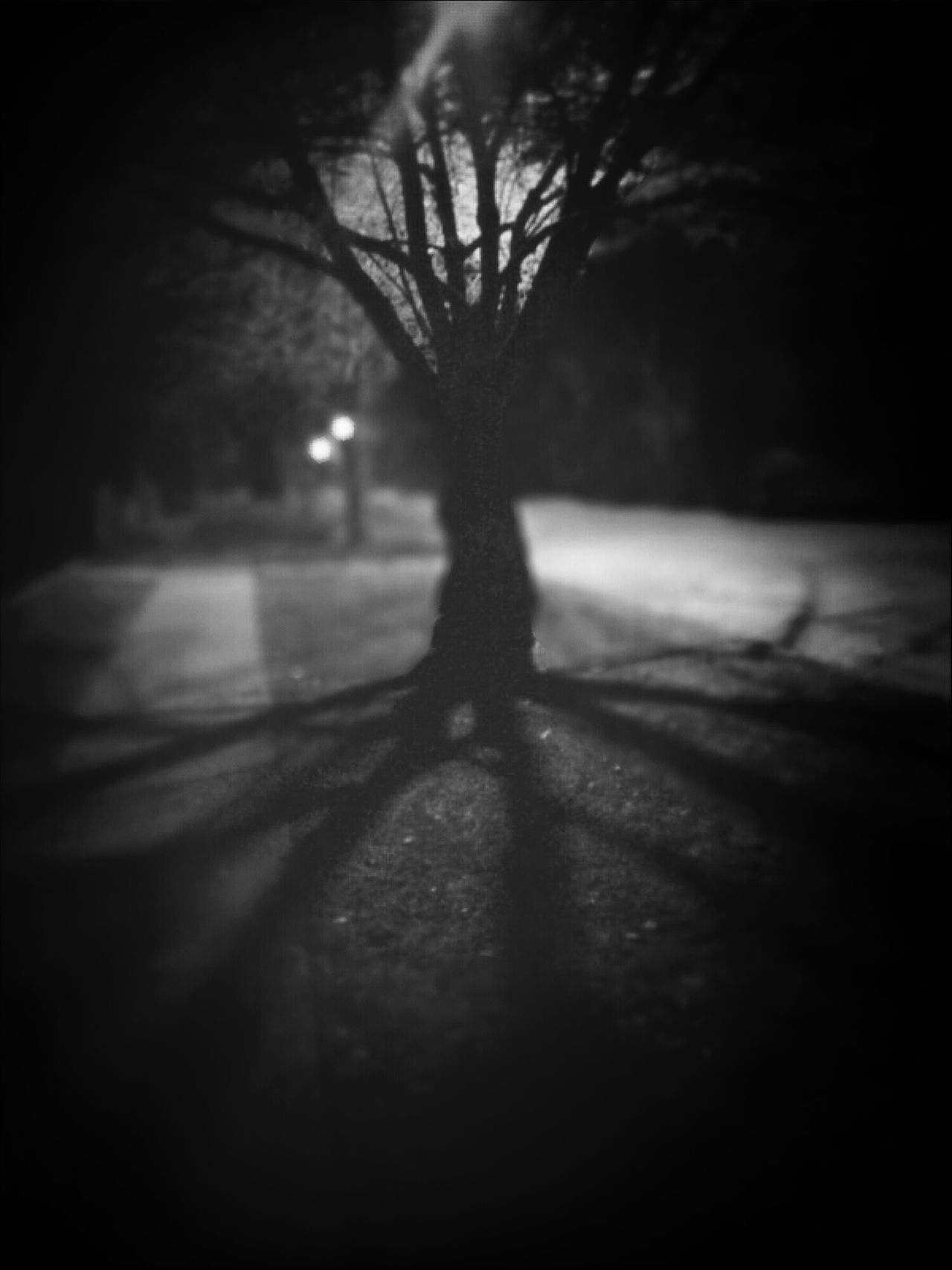 rooted Phoneography Andrography Ifeelmysterioustoday Picturesque