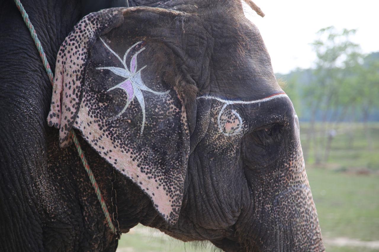 Skin Tattoo On Elephant Elephant Ear Elephant Skin Pattern Elephant Art Elephant Skin Elephant Elephants Elephant Nature Park Chitwan Chitwan National Park Elephant Trekking Elephant ♥ Nepal Nepal #travel