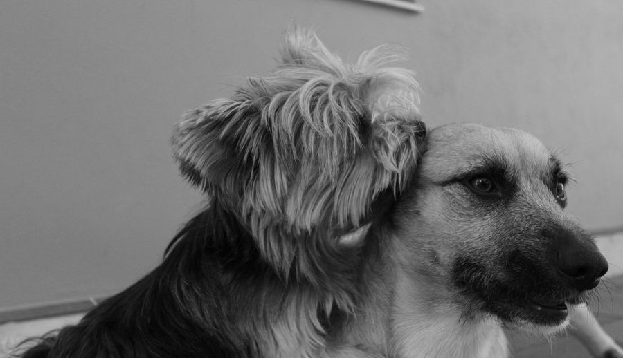 Black And White Black And White Photography Blackandwhite Monochrome My Dogs My Love My Love ❤ My Lovely Dog My Pets