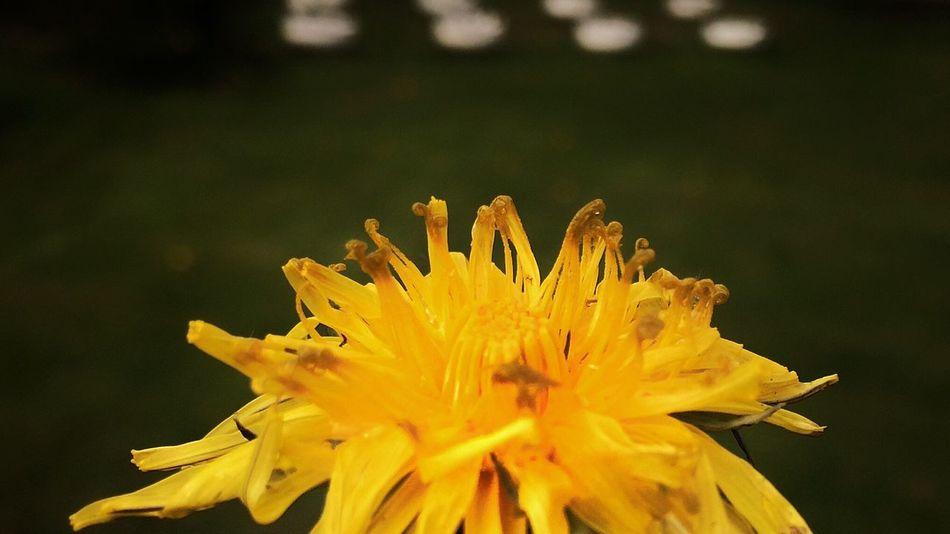 Macro IPhoneography Iphoneonly Russia Flowers Bokeh Saint Petersburg EyeEmRussianTeam
