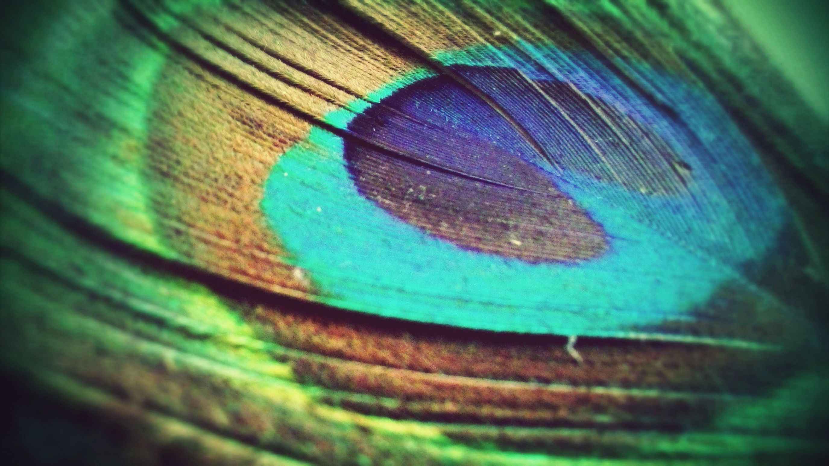 awsome peacock feather Peacock Feather Photography My Fav Shots