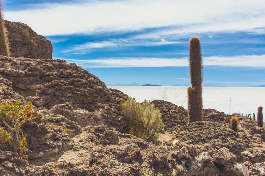 Isla Incahuasi - The Bolivian Salt Flats Beauty In Nature Bolivia Uyuni Cacti Cactus Cactus Flower Cactus Garden Calm Cloud Cloud - Sky Day Mountain Nature Non-urban Scene Ocean Outdoors Rock Rock - Object Rock Formation Salt Flats Scenics Sea Sky Tranquil Scene Tranquility Water