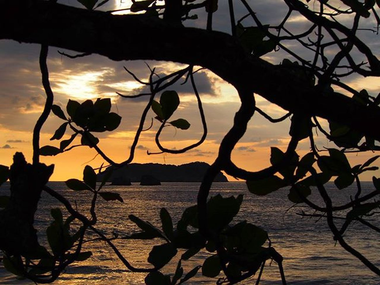 Sunset from behind a tree on the beach in Manuel Antonio, Costa Rica ------------------------------------------------------ Manuelantonio Costaricagram Costarica Costarica2015 Sunsets Sunset_madness Sunrise_sunsets_aroundworld Gadventurestour Gadventures Island Islands Centralamerica Clouds Cloudscape Cloudporn Silouette Oceanside Ocean Travelling Travelgram Instatravel Takemeback Olympus Beach Beachlife instagram instapic landscape natgeotravel