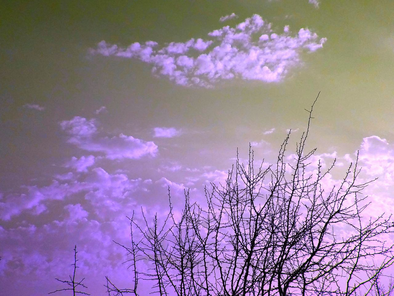 Sky Purple Beauty In Nature Nature Tree No People Flying Outdoors Day EyeEmNewHere Hello World HelloEyeEm Sunbeam Tranquil Scene Cloudscape Dramatic Sky Sunlight Tranquility Low Angle View Scenics Nature Beauty In Nature Sunset