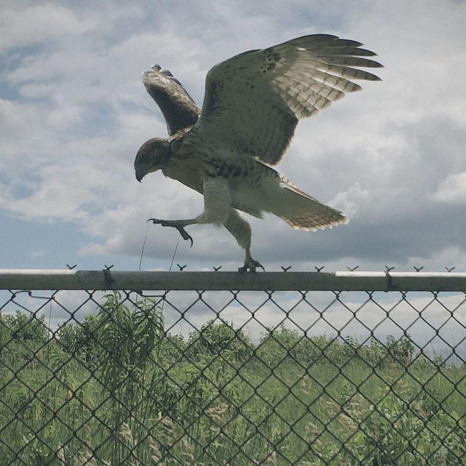 Beautiful stock photos of wings, Animal Themes, Animals In The Wild, Bird, Bird Of Prey