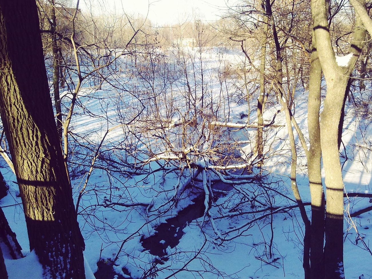 Walking Around Winter Winter Wonderland Sunlight Nature Snow
