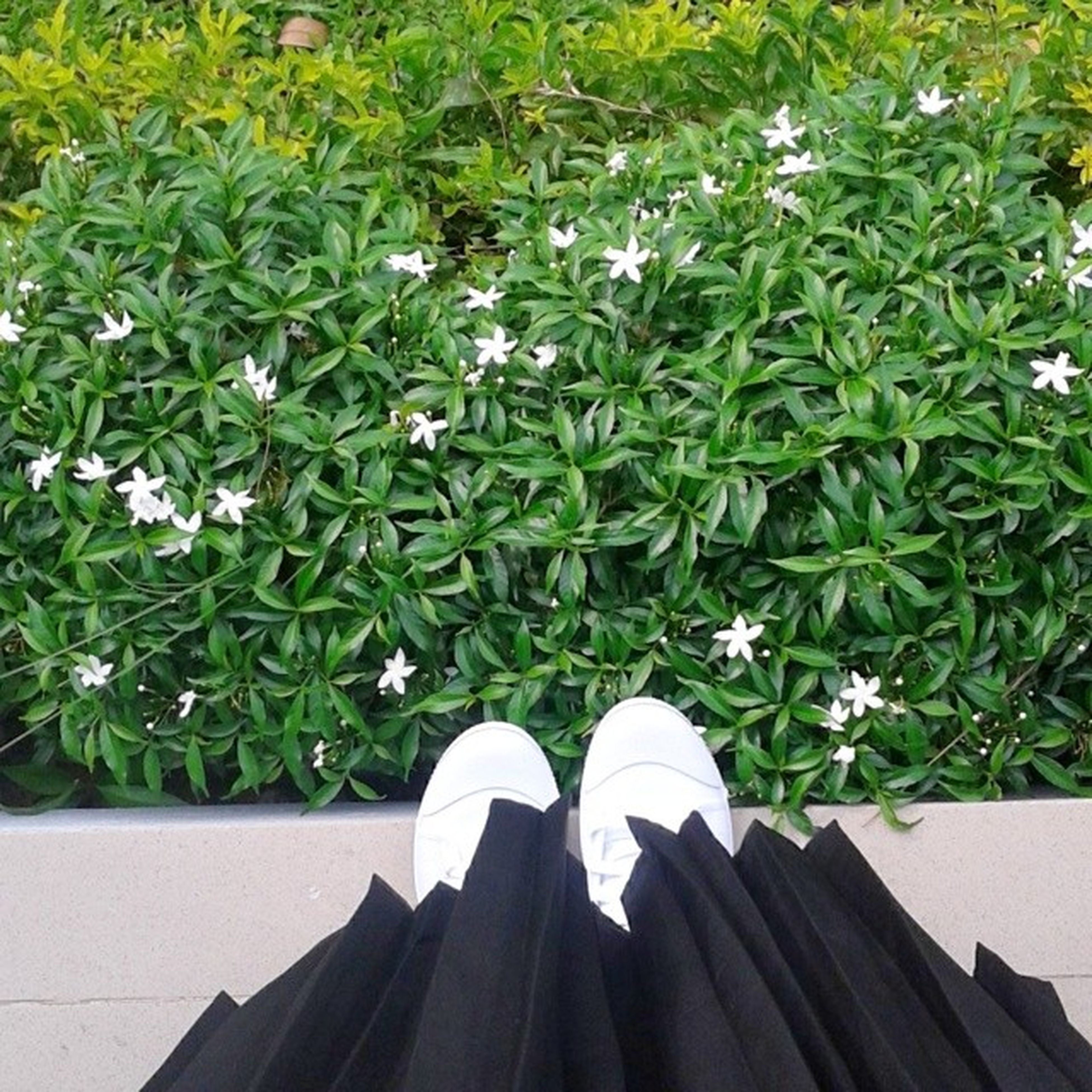 growth, plant, flower, high angle view, leaf, white color, green color, freshness, nature, potted plant, day, beauty in nature, outdoors, no people, fragility, wood - material, sunlight, petal, park - man made space, bench