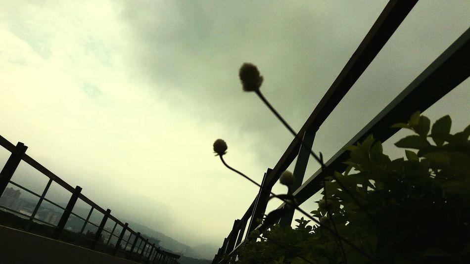Sky Green Flowers Taipei Tamsui River