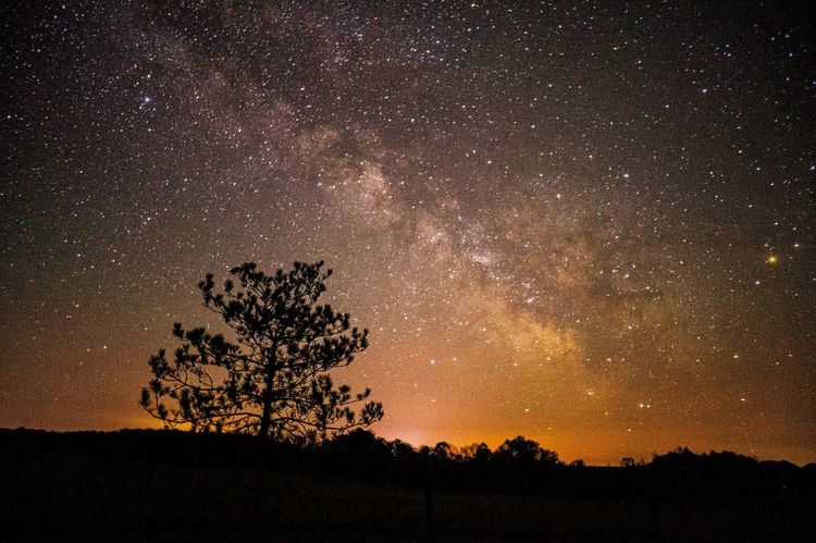 Milkywaygalaxy Milkyway,sky,star,landscape,night Nightphotography Night SkyAstrophotography Tree Sillouette Galaxy Light And Shadows Light And Shadow The Countryside At Night Under The Milky Way Landscapes With WhiteWall Fine Art Photography