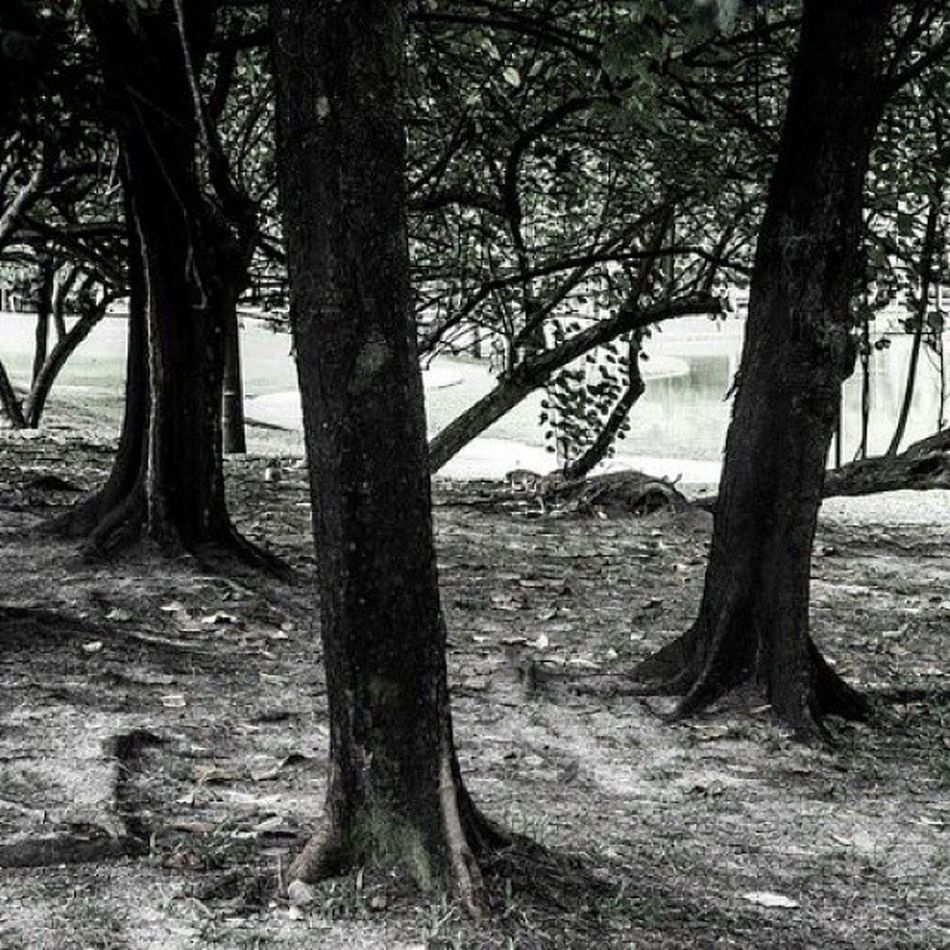 Trees Blackandwhite Nature Green Daylight Oneutama Damansara
