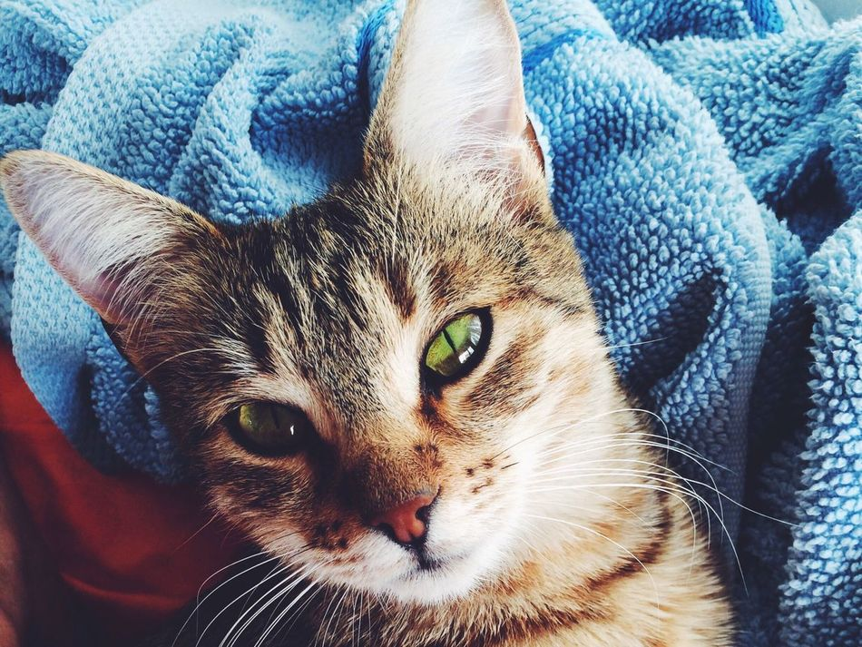 My ? cat My Cat Mirana Cat Catoftheday Green Eyes Gatto My Pet кошка моя любимая кошка самая лучшая кошка