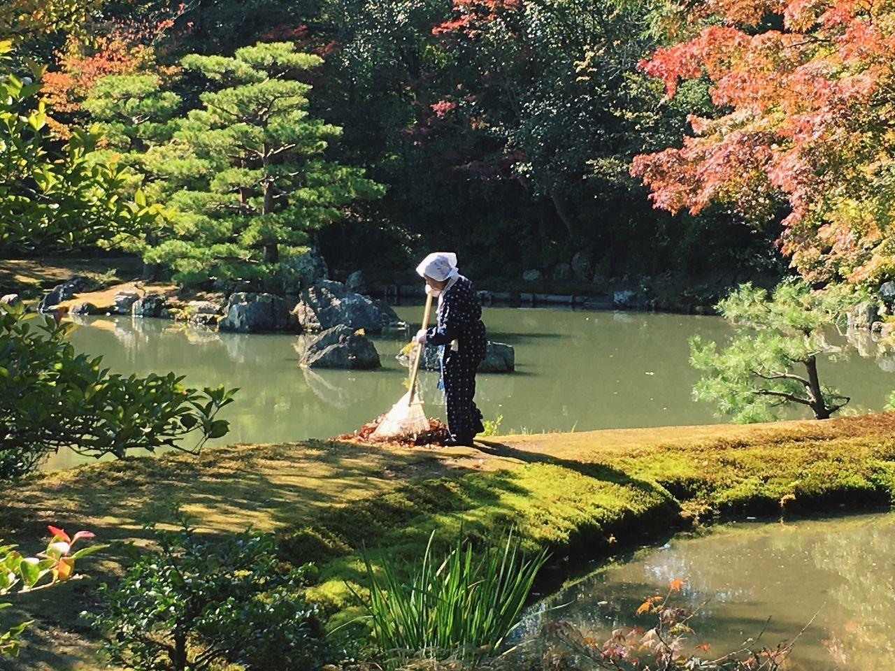 Autumn Autumn Colors Autumn Trees Golden Temple