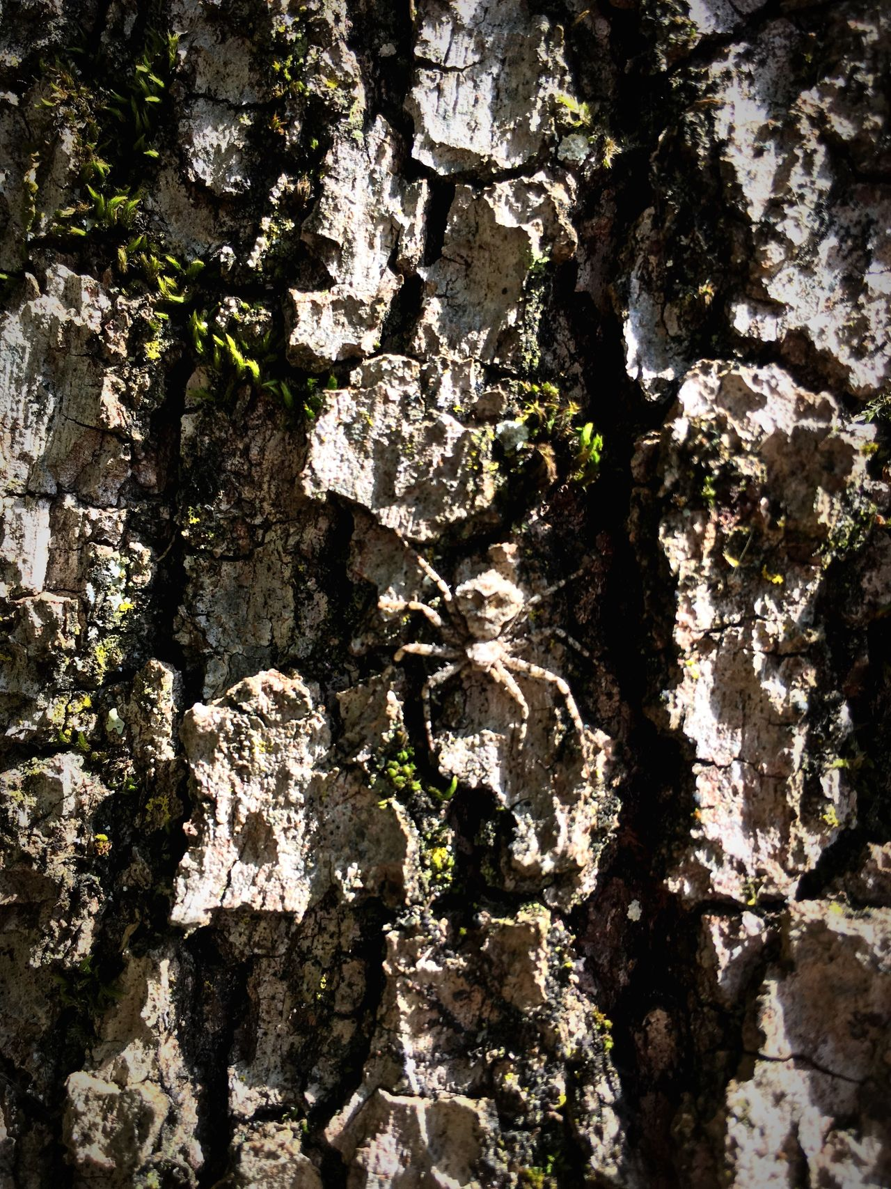 Searching Spiderworld Textured  Nature Tree Dangerous
