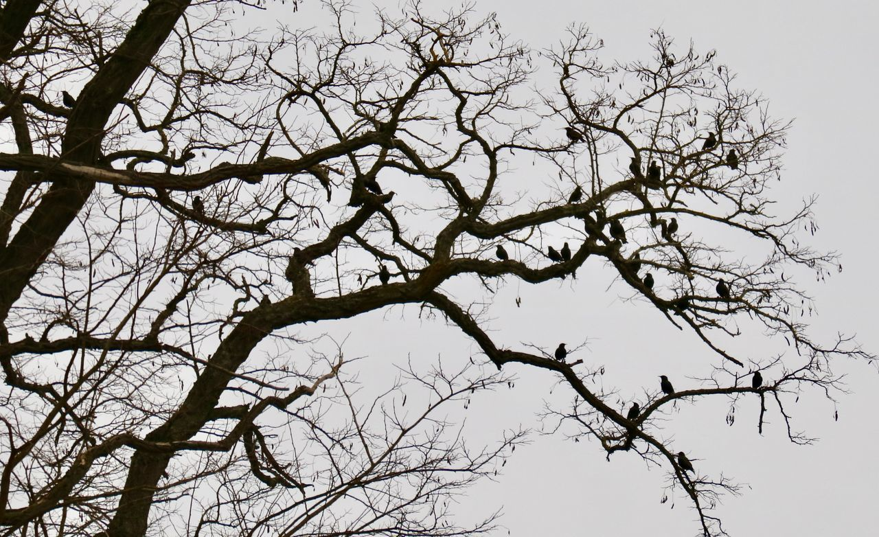 G U T E N A B E N D !!! Bare Tree Beauty In Nature Bird Photography Branch Close-up Daswasichsehe😊 Day Goodevening  Hobbyphotography Lovely Low Angle View March Marz MyWorld ♡ Nature No People Outdoors Saturday Sky Tranquility Tree