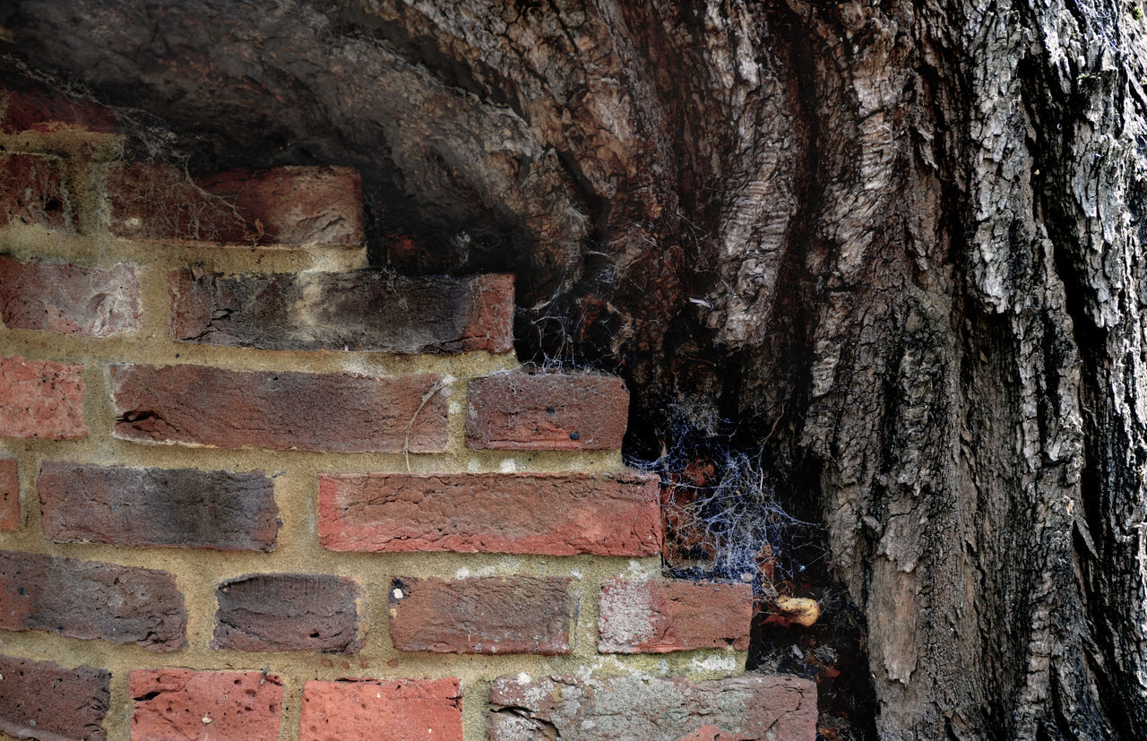 An ancient tree supoorted by a brick wall in Kew Gardens, London Bark Brick Wall Brick Work Day Kew Gardens Nature No People Outdoors Supported Tree Tree Trunk