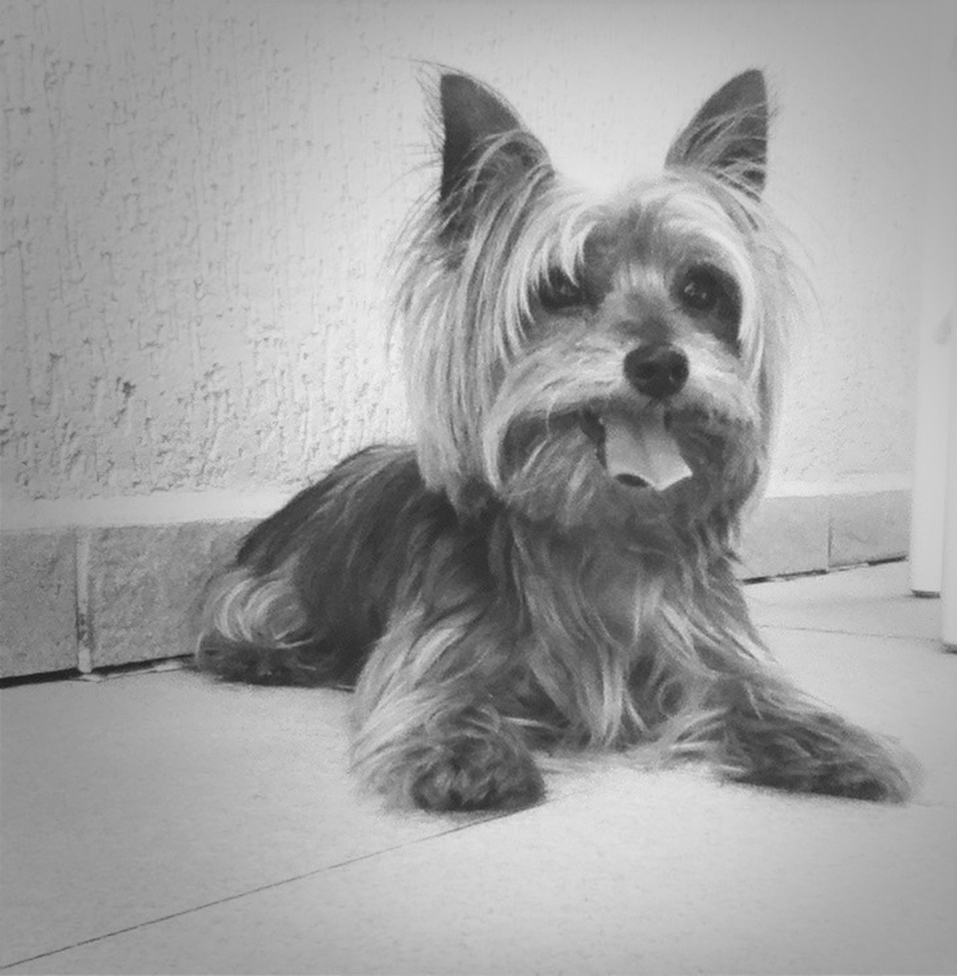 dog, pets, domestic animals, one animal, mammal, animal themes, portrait, indoors, animal hair, looking at camera, sitting, relaxation, home interior, loyalty, pampered pets, animal head, no people, cute, close-up, lying down