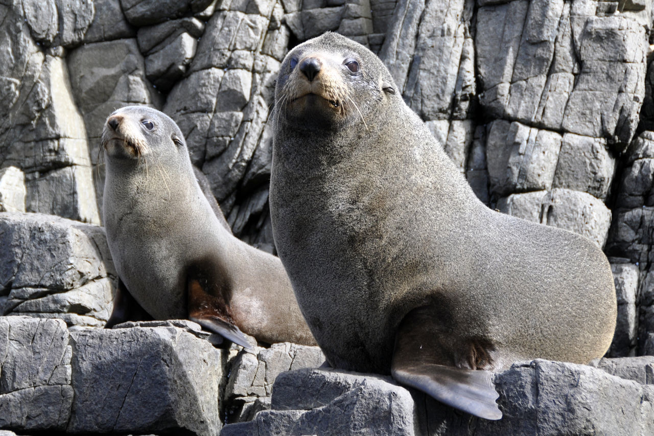 Animal Family Animals In The Wild Close-up Mammal Nature Outdoors Rock Togetherness Two Animals Wildlife Zoology