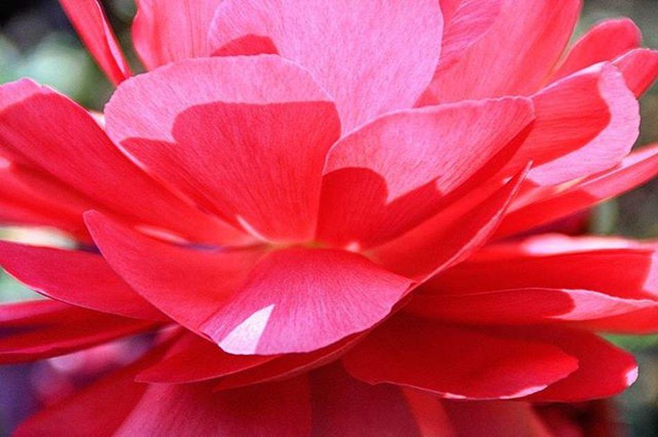 Pinkandpretty Pink Transparent Garden InTheGarden Naturephotography Enjoylife Mindfulness Awareness Picoftheday Photographylovers Meandmycamera Lovelife