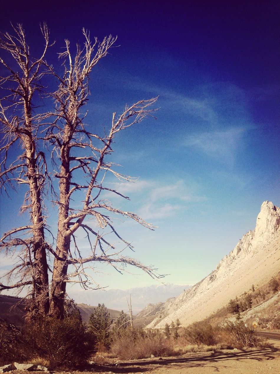 Traveling California Inyo National Forest Landscape