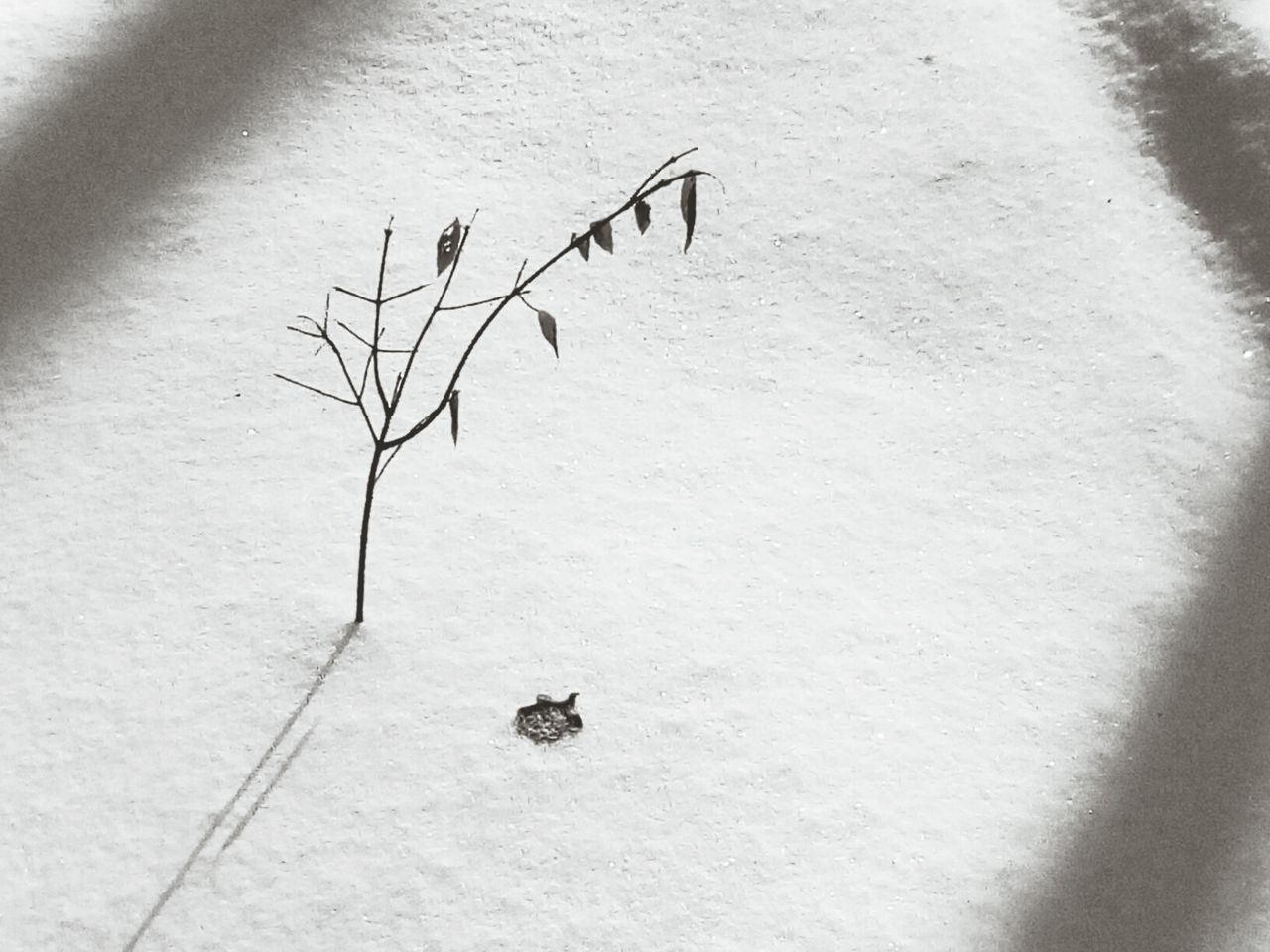 Nature Sand Plant No People Tranquility Close-up Day Outdoors Beauty In Nature Sunlight Bare Tree Frozen Blackandwhite Black & White EyeEm Nature Lover Nature_collection The Great Outdoors - 2016 EyeEm Awards Plant Sky Landscape Tree Trunk Beauty In Nature Cold Temperature Winter Snow