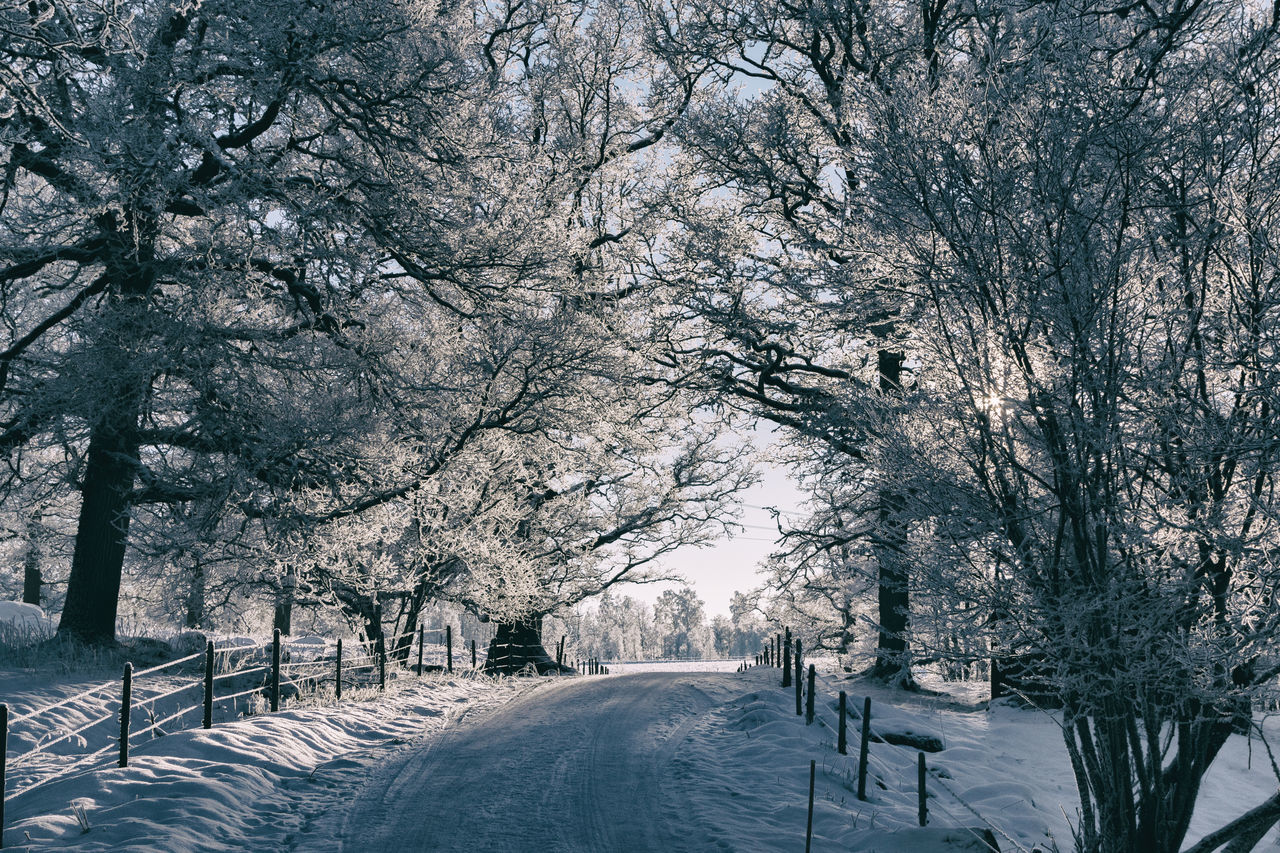 Beauty In Nature Branch Cold Temperature Day Drastic Edit Exceptional Photographs EyeEm Best Edits Finding New Frontiers Frost Frosty Hello World Idyllic Landscape Light And Shadow Nature No People Outdoors Scenics Sky Snow The Way Forward Tranquility Tree Winter Winter Wonderland