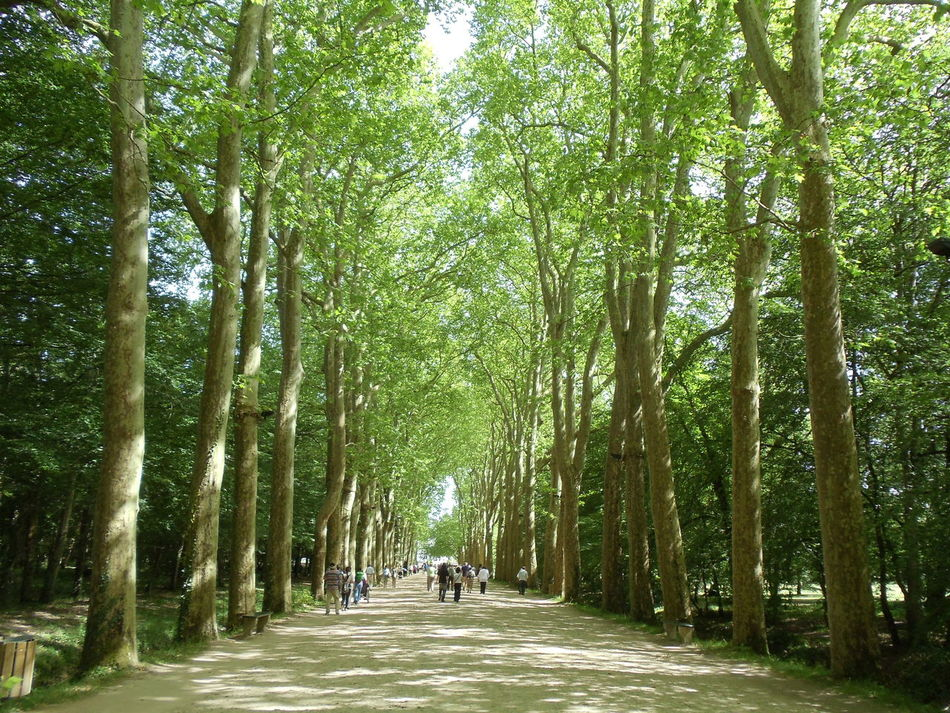 France 🇫🇷 France Loire Valley Nature_collection People Walking  Tall Trees Trees Alley Trees Collection