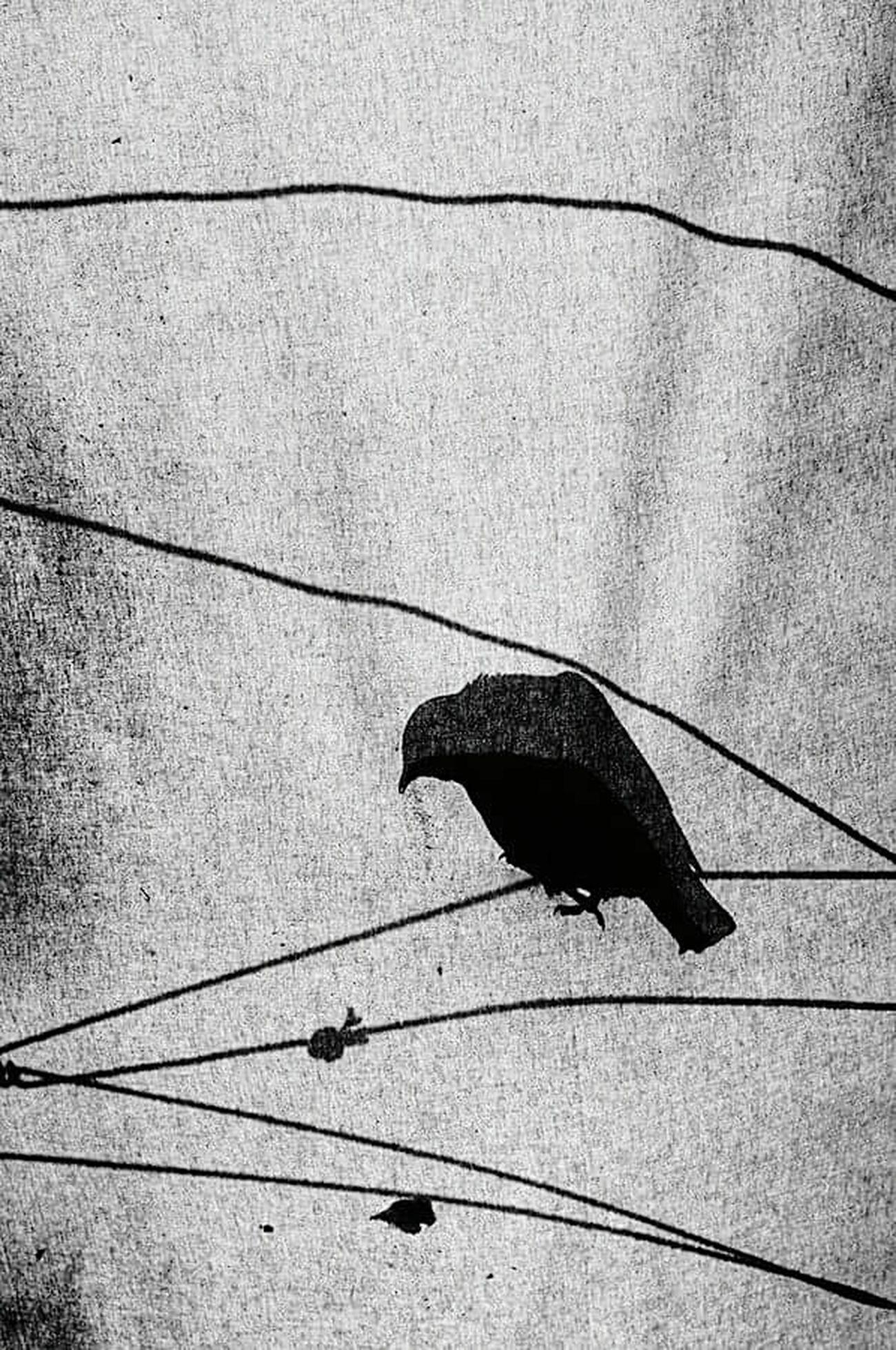 One Animal Close-up Bird Photography Bird Shadow Shadows And Backlighting Shadows & Light Turkey Konya Konyagram Naturmort Light Live Black & White Siyah&beyaz  Fotografie