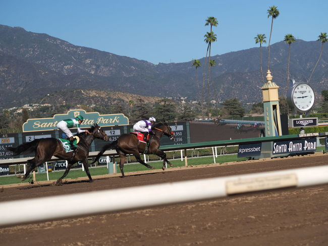 California Competition Fight Horses Outdoors Race Race Horse Racetrack Racing Speed Winner