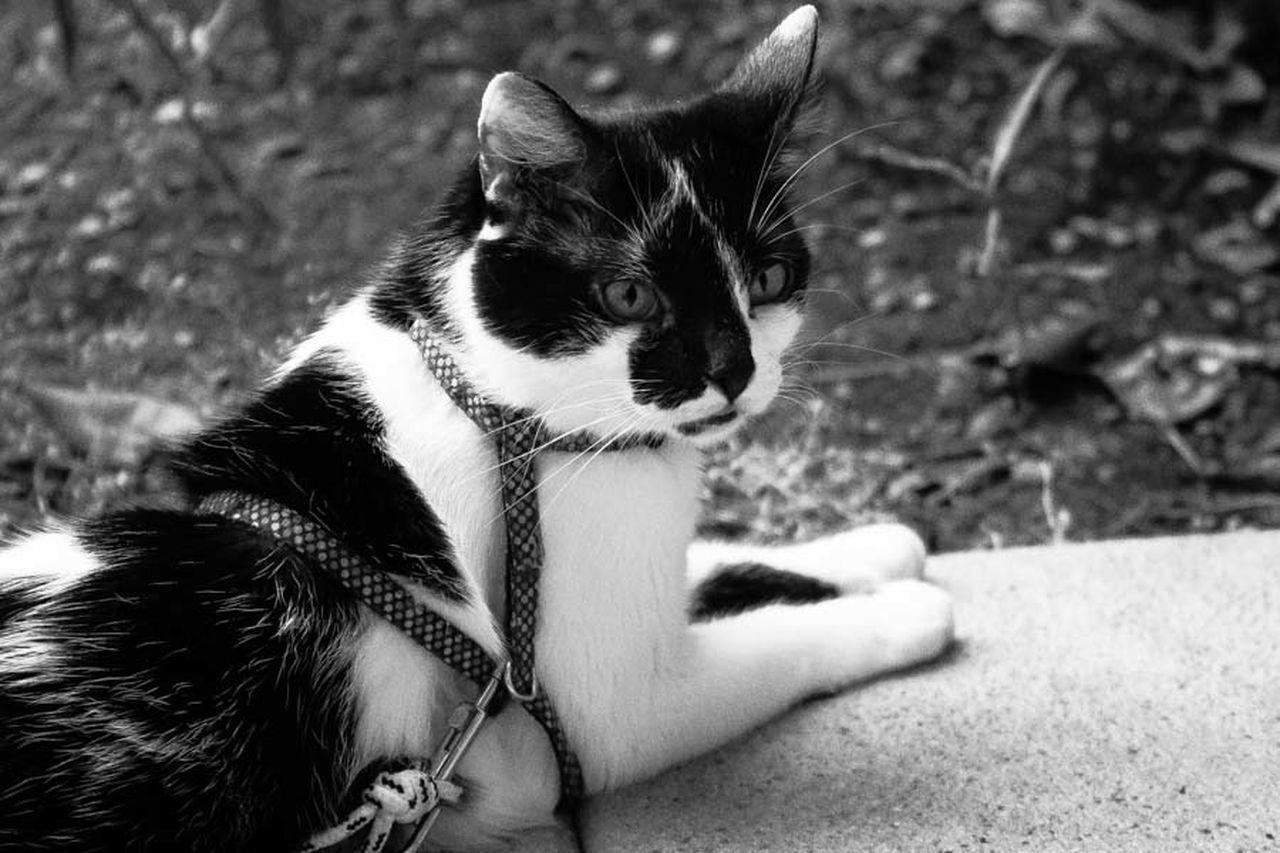 °Ciukino° Cat Cat Lovers Mycat Mylove Photo Photographer Photographic Memory Photography Photoshoot