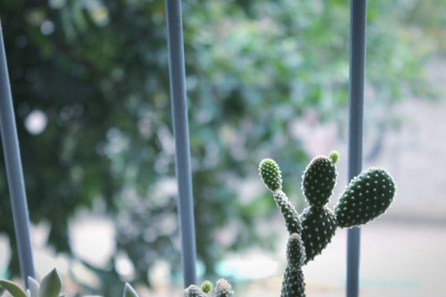 Cactus Plant Moment What Lies Beyond...