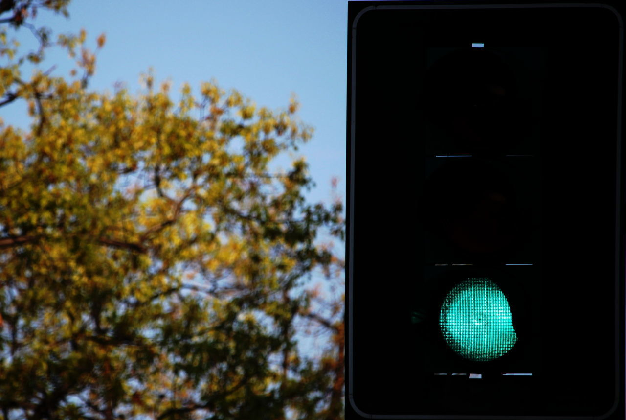 transportation, stoplight, tree, clear sky, day, no people, illuminated, autumn, low angle view, outdoors, sky, close-up, road sign, nature, technology