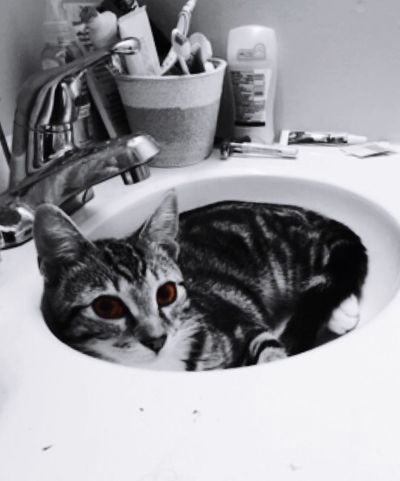 She is cold chillin CoolCat Blackandwhite Brown Eyes Cute Pets Bathroom Pic