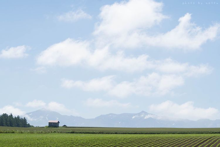 初夏の風景。 Hokkaido Japan 北海道 Nature Photography Biei Bieicho Mountains Astronomy Sky Summer Sky  Summertime 畑 山