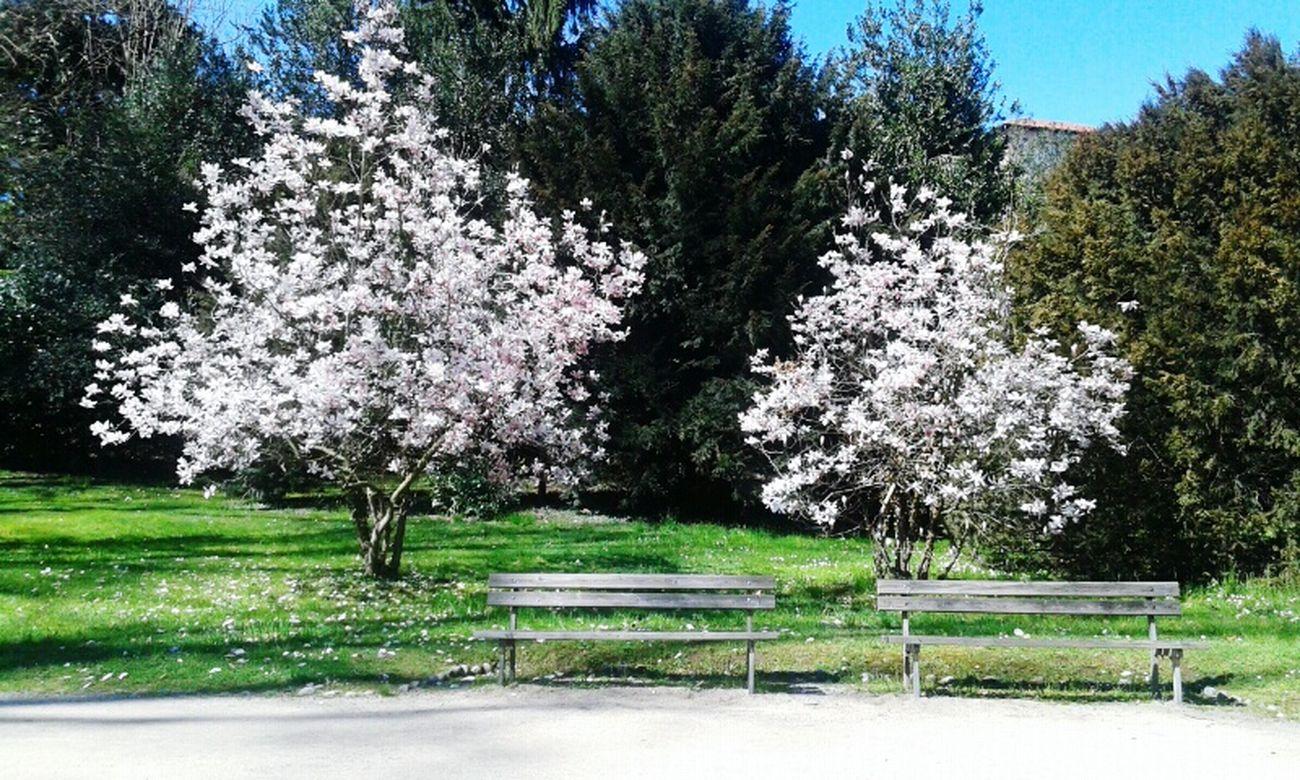 Beautiful Nature Hungout Springtime