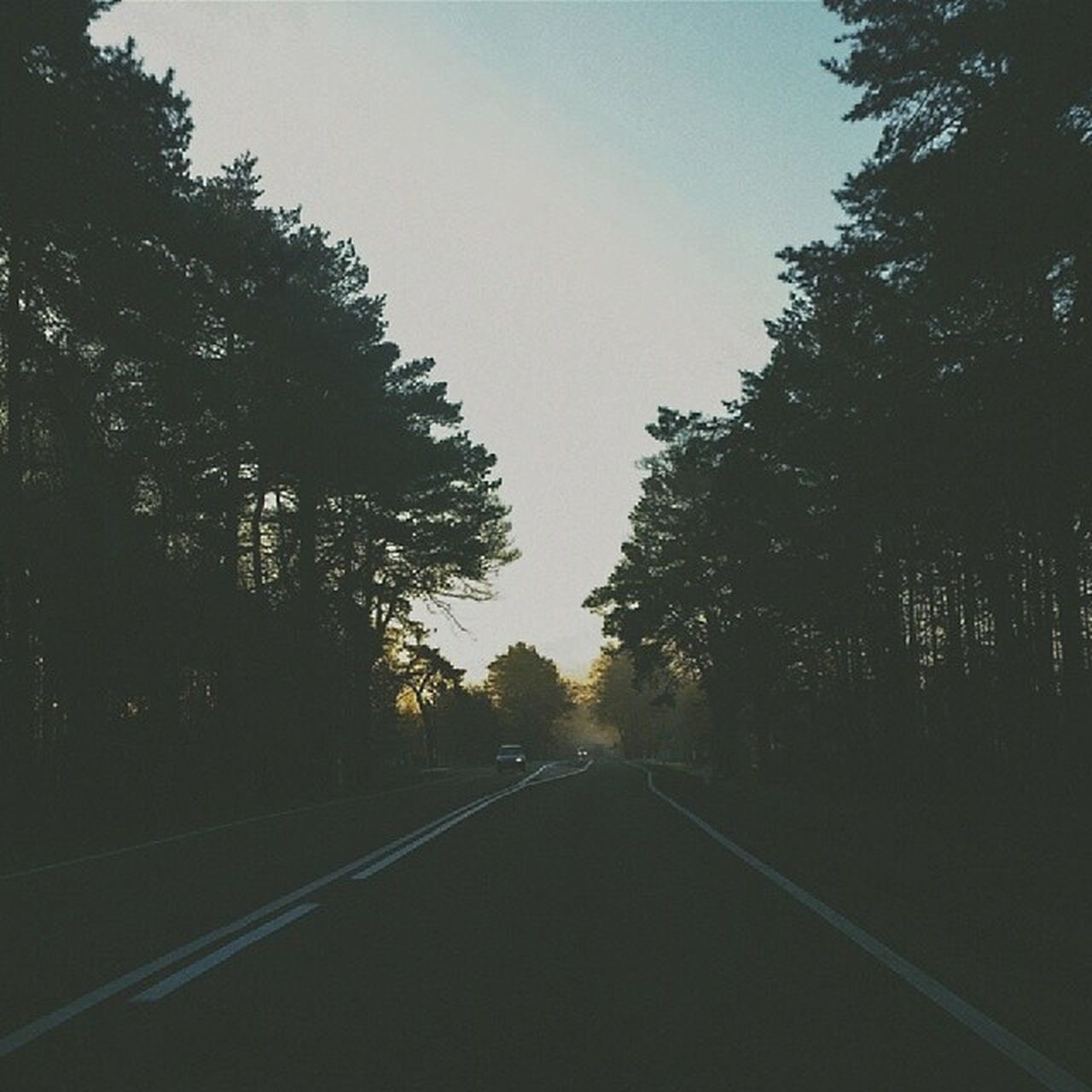 tree, road, the way forward, diminishing perspective, straight, transportation, no people, silhouette, nature, outdoors, day, landscape, growth, sky, clear sky