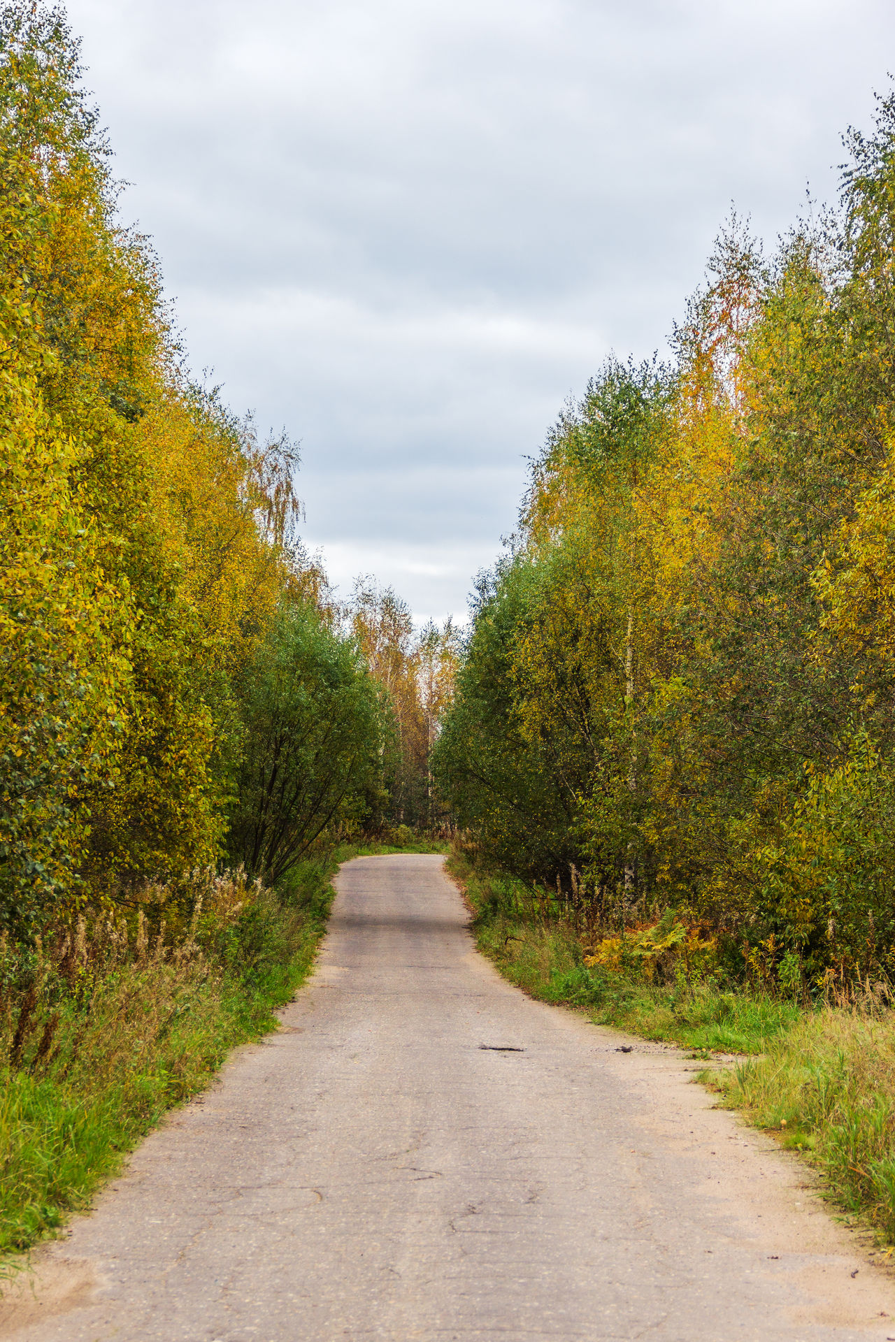 The provincial road between the villages of Tver region. Autumn Day Landscape Leaf Nature No People Outdoors Road Road Scenics Single Lane Road Sky The Way Forward Tree Treelined Yellow