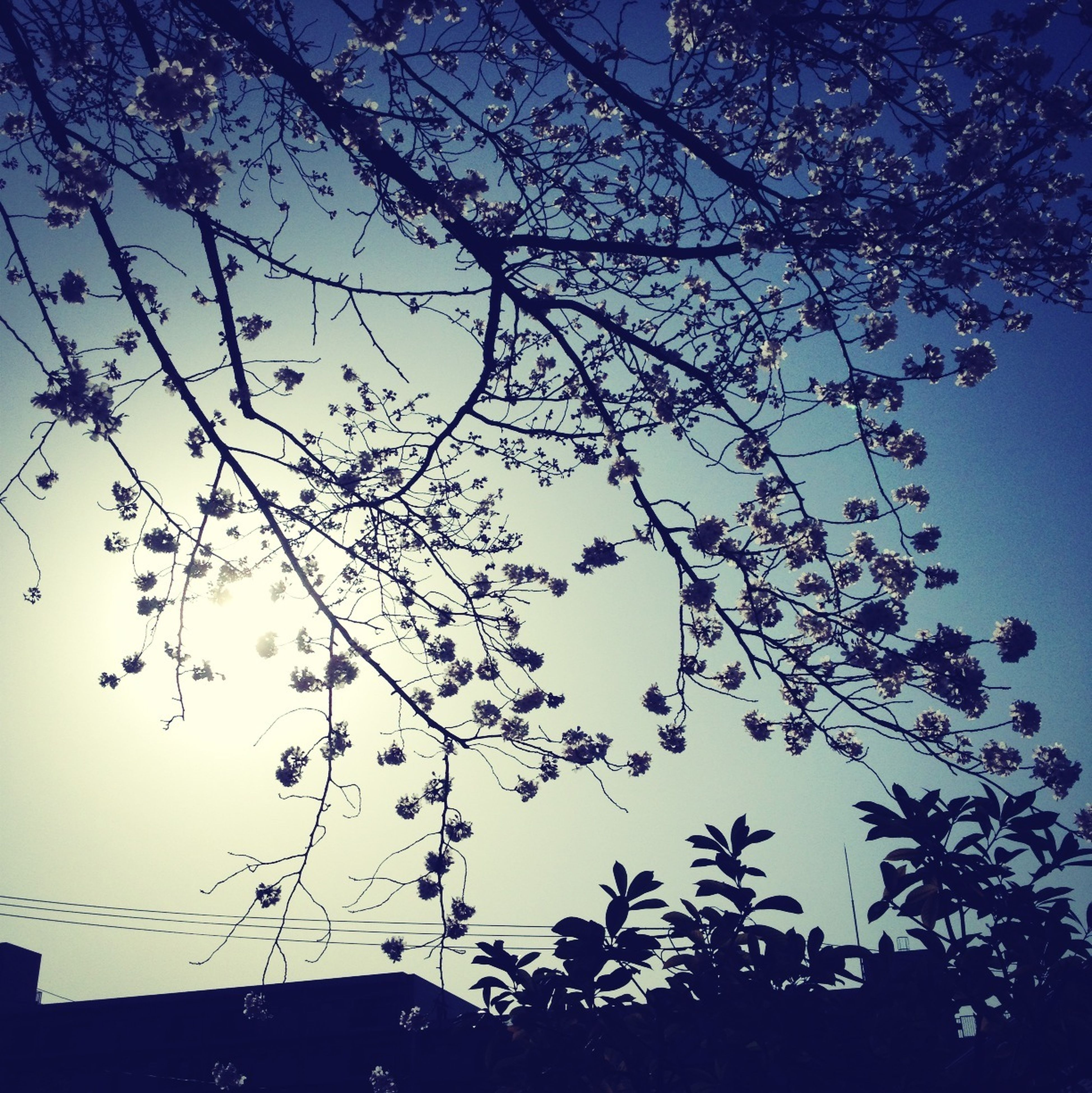 low angle view, silhouette, tree, branch, sky, growth, blue, nature, beauty in nature, dusk, tranquility, clear sky, outdoors, high section, no people, scenics, sunlight, day, bare tree, outline